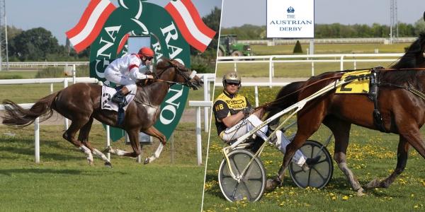 Pferderennen im Magna Racino